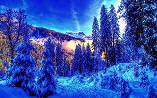 Фото бесплатно природа, пейзаж, ели