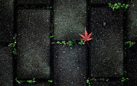 Photo free photography, fall, nature