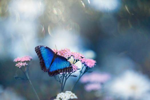 Заставки Бабочка на цветке, цветок, флора