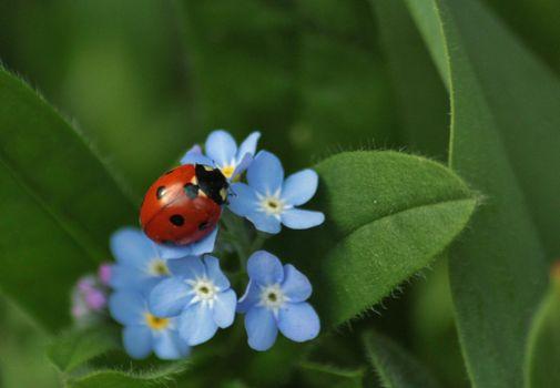 Бесплатные фото цветы,растение,божья коровка,макро,насекомое,зелёный