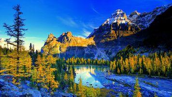 Фото бесплатно лес, пейзаж, обои