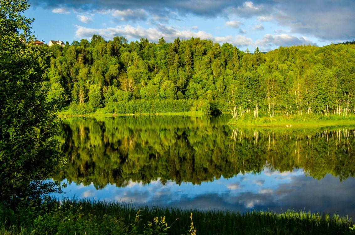 Фото бесплатно река, лес, деревья, отражение, пейзаж, пейзажи
