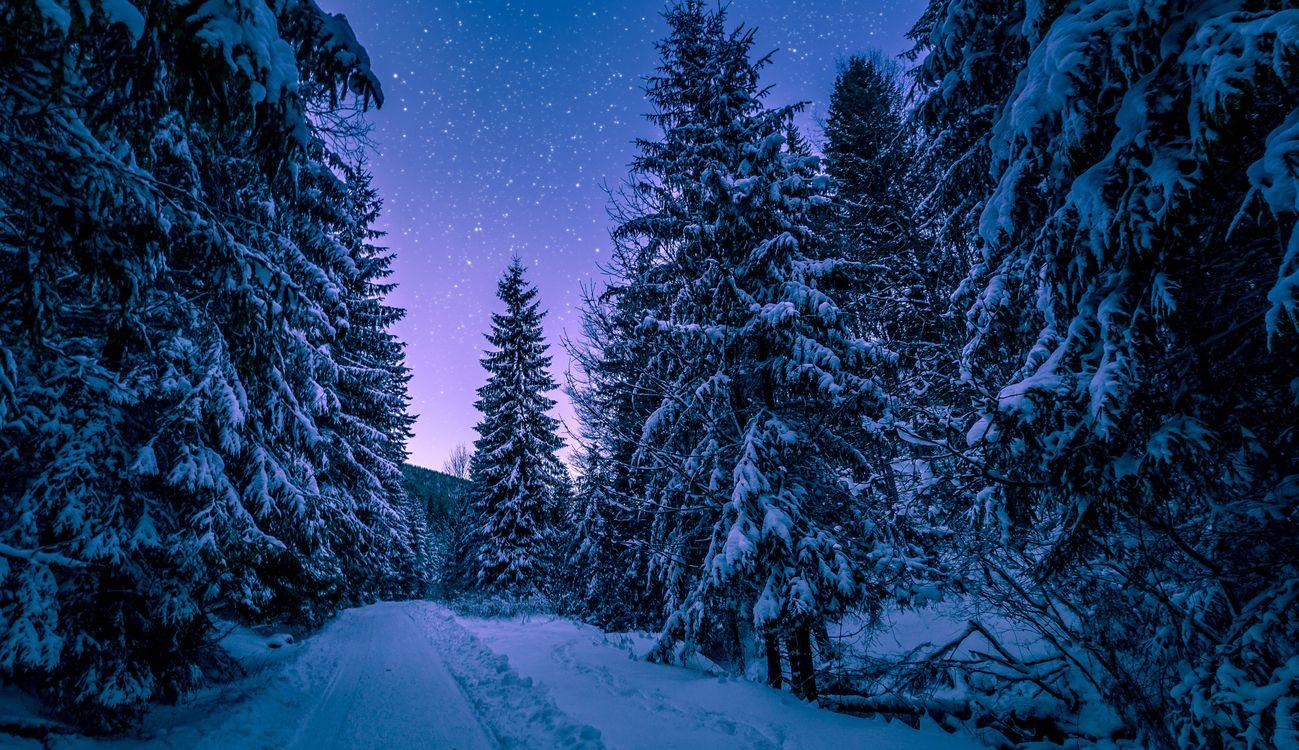 Фото бесплатно зима, сумерки, природа - на рабочий стол