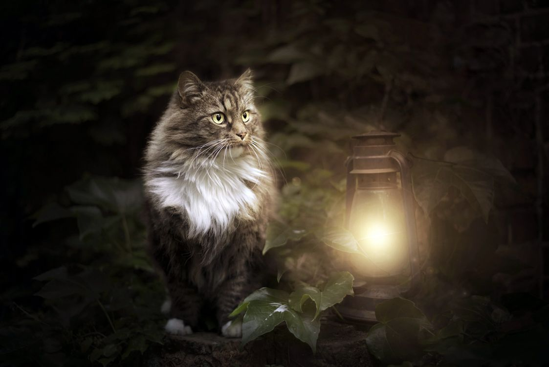 Фото бесплатно cat, lantern, animals, кошки