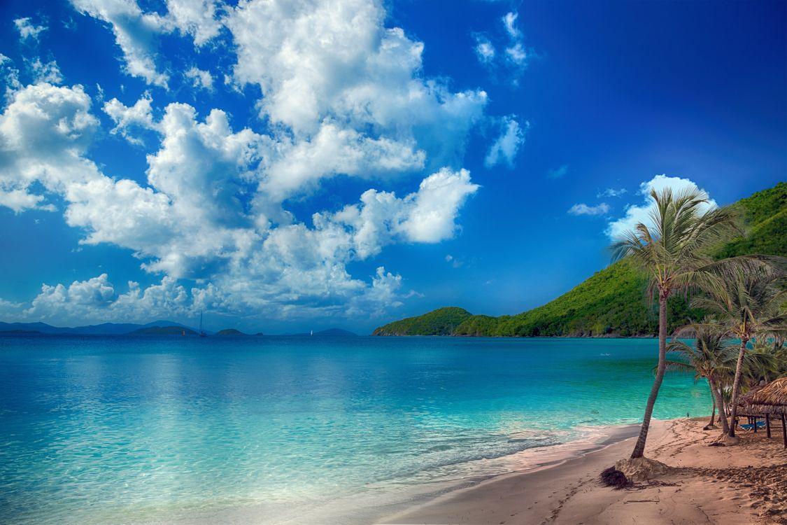 Обои beach, tropical, palms картинки на телефон