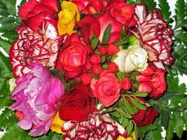 Фото бесплатно флора, букет, цветочные