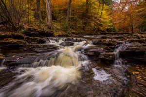 Заставки Рикеттс Glen State Park, в Пенсильвании, лес
