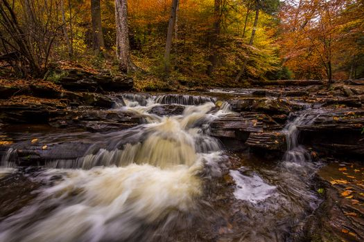 Photo free Ricketts Glen State Park in Pennsylvania, forest, United States