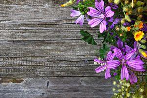 Фото бесплатно задний план, красивая, красоту, букет, цвет, красочный, украшение, флора, цветочный, цветок, цветы, свежий, зеленый, жизнь, естественный, природа, старый, растение, все еще, лето, ваза, марочный, стена, белый, деревянный