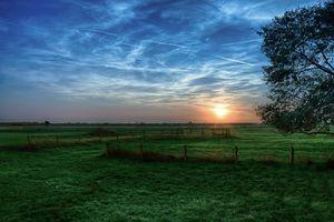 Фото бесплатно поле, ветви, закат