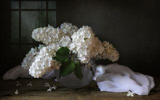 Бесплатные фото букет сирени,ваза,сирень,цветы,флора,натюрморт