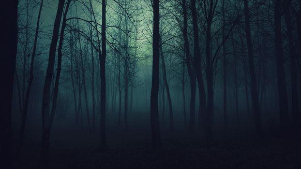 Фото бесплатно жуткий, темно, лес