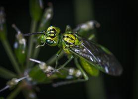 Фото бесплатно осы, вредители, дикие животные