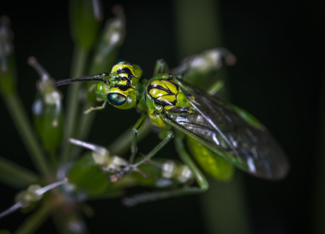 Free photo wasp, pest, wildlife - to desktop