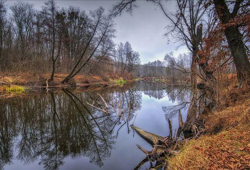 Фото бесплатно осенние листья, осень, озеро