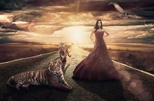 Фото бесплатно искусство, дорога, тигры