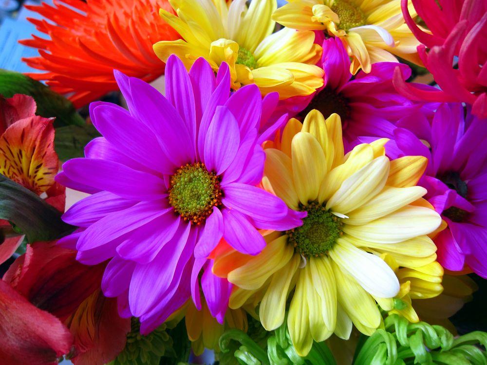 Живые цветы · бесплатная заставка