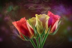 Фото бесплатно цветут, тюльпаны, цветы