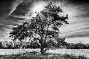 Бесплатные фото дерево,лучи,солнце,Sonnenbaum,Westruper Heide,Germany