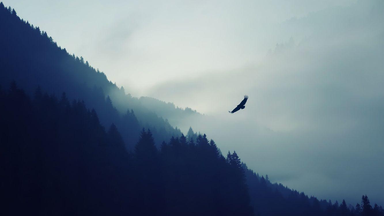 Фото бесплатно парящий орел, туман, пейзаж - на рабочий стол