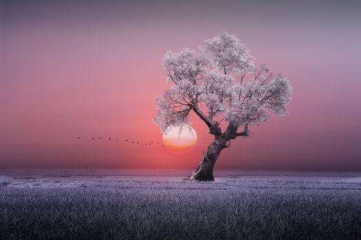 Фото бесплатно ночь, поле, иней