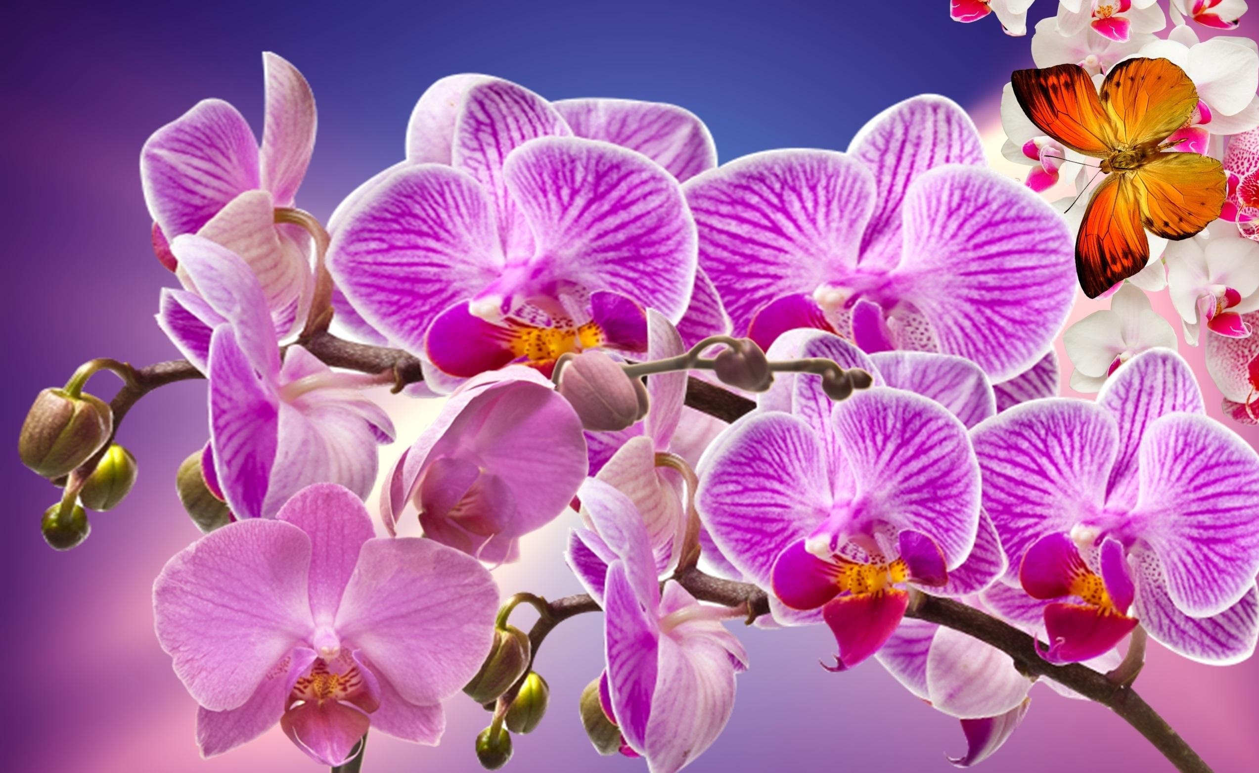 Красивые цветы картинки орхидеи