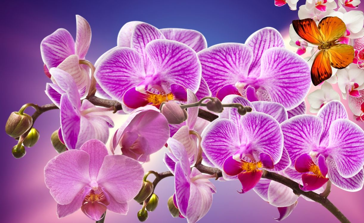 Удивительные орхидеи · бесплатное фото