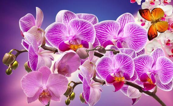 Удивительные орхидеи