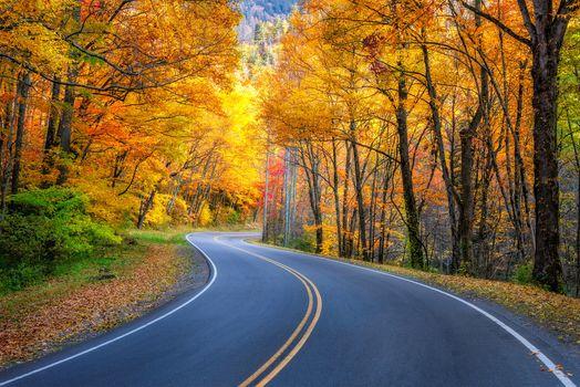 Новое фото на тему осенние краски, дорога