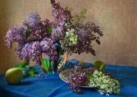 Бесплатные фото букет сирени,сирень,цветы,флора,натюрморт