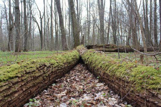 Фото бесплатно кора, деревья, листья