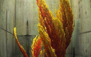 Заставки низкополигональная, дерево, осень