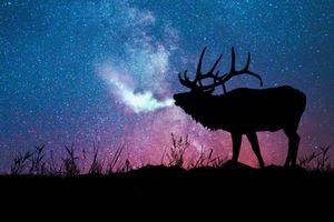 Бесплатные фото небесное свечение,поле,олень,ночь,сумерки,art