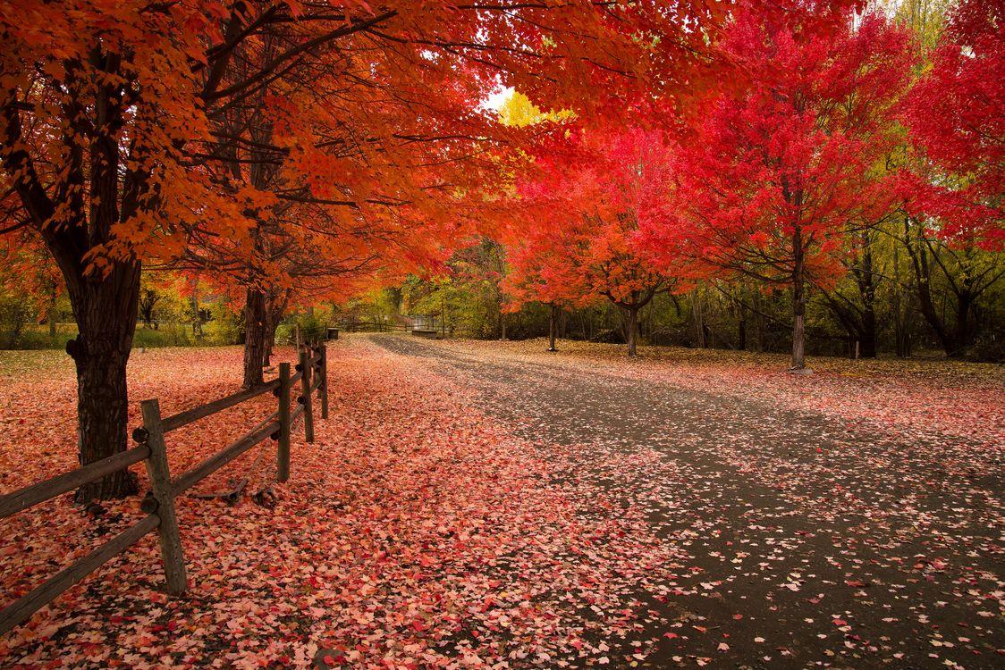 Фото бесплатно осень, парк, дорога, деревья, пейзаж, краски осени, осенние краски - на рабочий стол