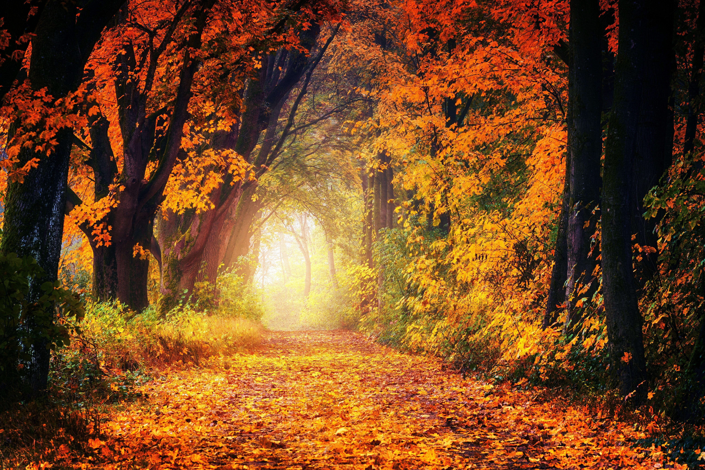 красота осеннего леса фото цель клинического исследования