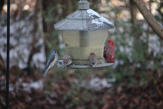 Бесплатные фото снег,холод,животные,птицы,скворечник