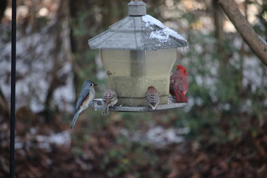 Заставки снег,холод,животные,птицы,скворечник