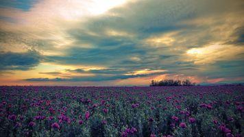 Фото бесплатно закат солнца, поле, небо
