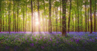 Фото бесплатно цветы, солнечный свет, лес