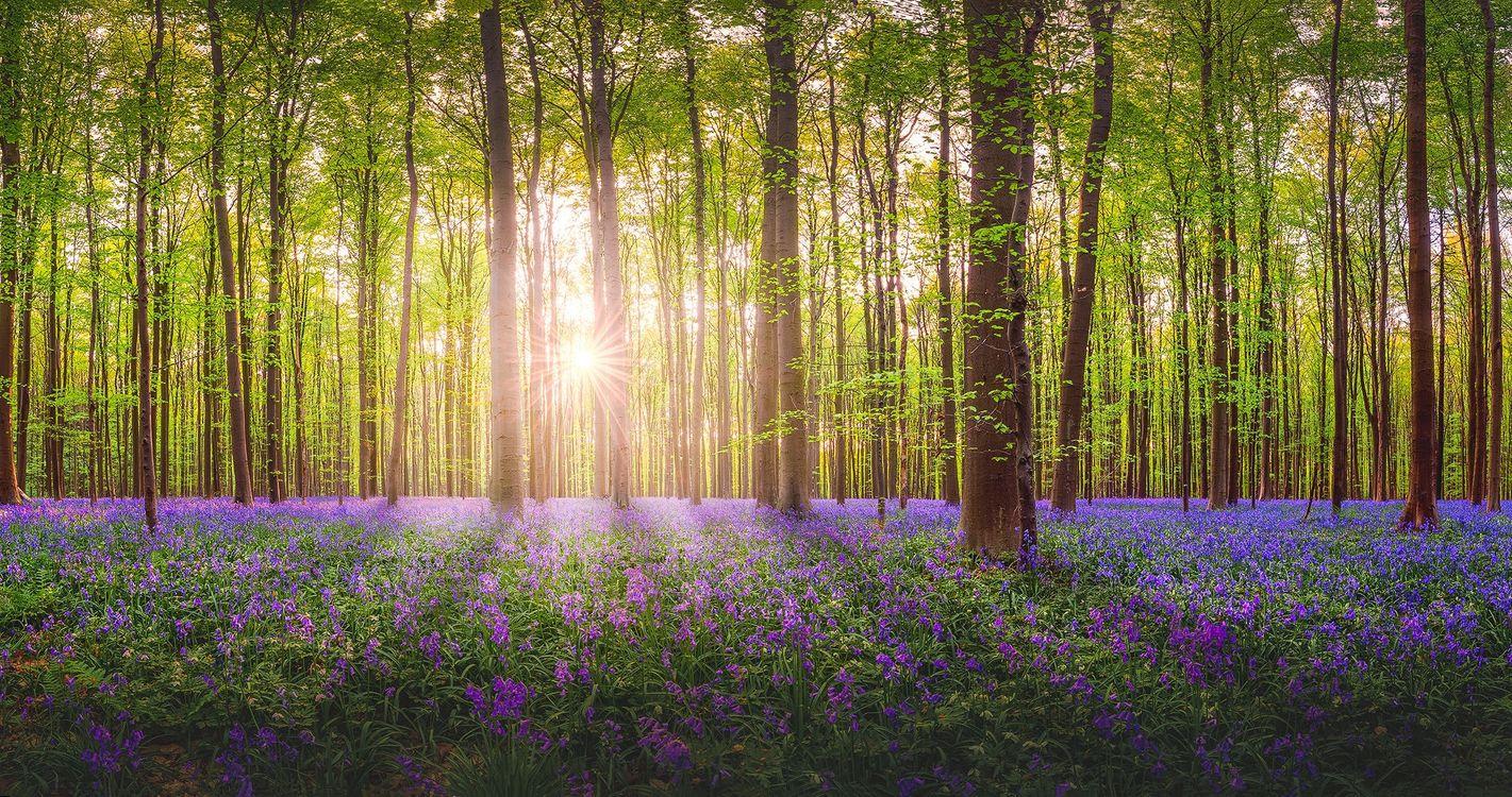 Фото бесплатно цветы, солнечный свет, лес - на рабочий стол