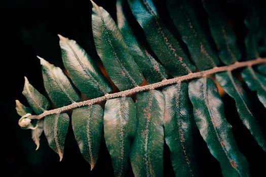 Заставки растение,цветок,крупный план,зеленый,лист,рабочий стол,облако,закат