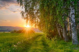 Фото бесплатно дорога, деревья, березы