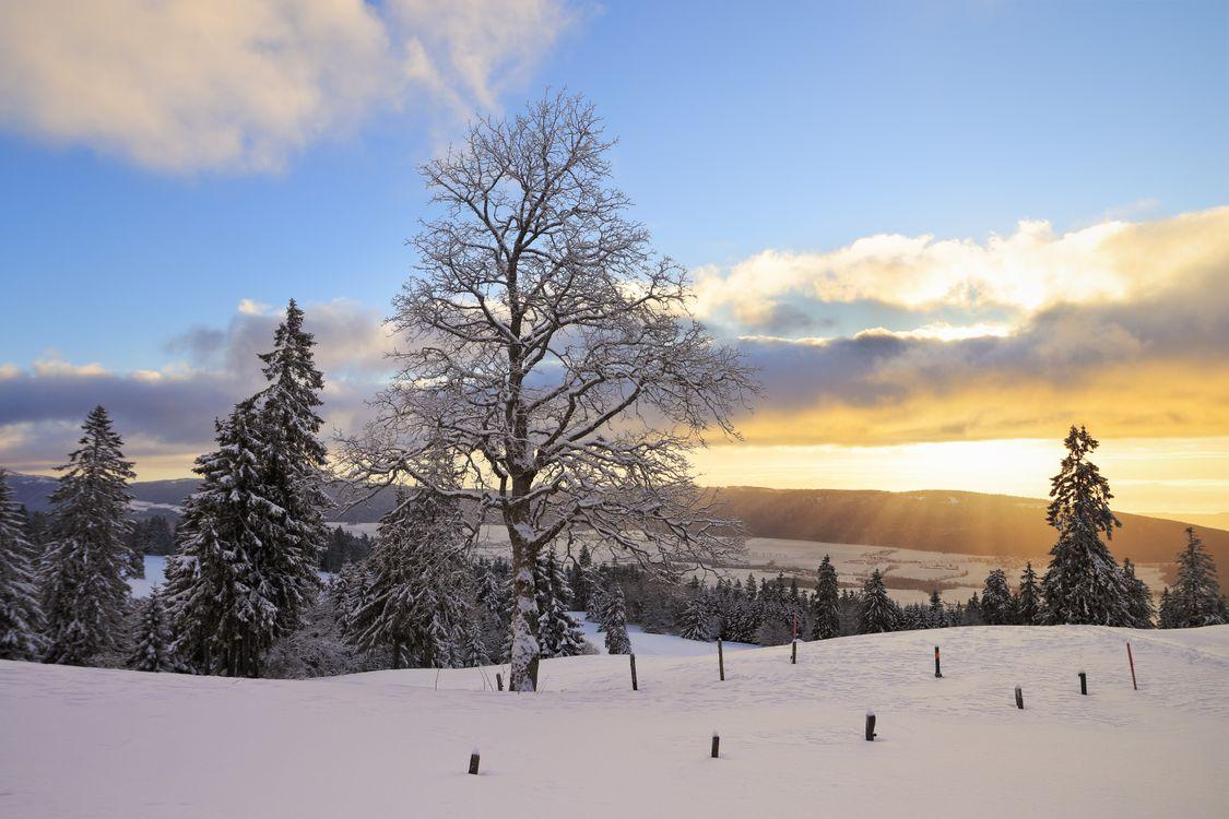 Фото бесплатно Солнечные лучи в Тет-де-Ран, Невшатель, Швейцария, зима, снег, деревья, пейзаж, пейзажи