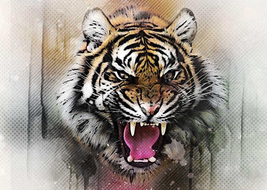 Фото бесплатно тигр, кошка, хищник, животные, опасный, природа, млекопитающее, кошачий, живая природа, дикая кошка, цифровой манипуляции, фото искусство, оскал, art, клыки, рендеринг