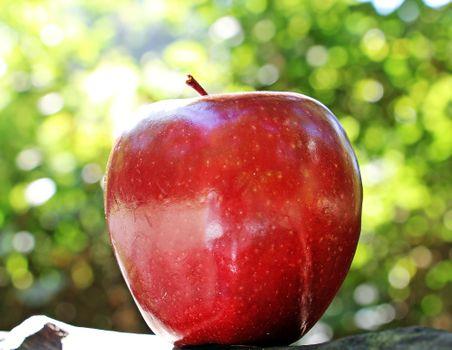 Фото бесплатно яблоко, бок, фрукты
