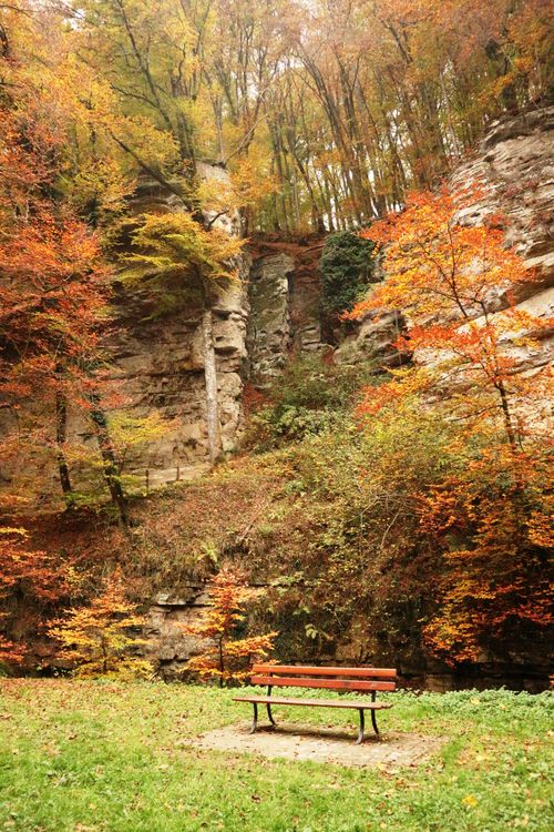Обои атмосфера, осень, скамейка, поход, листья, люксембург, млеральный, природа, отдых, время года, ходить, дерево на телефон   картинки природа