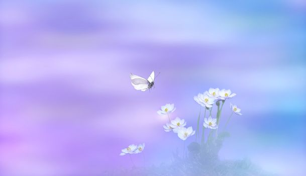 Photo free flowers, butterfly, flora