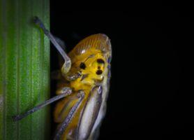 Бесплатные фото листовертик,макрос,насекомое,глаз,беспозвоночный,макросъемка,фауна