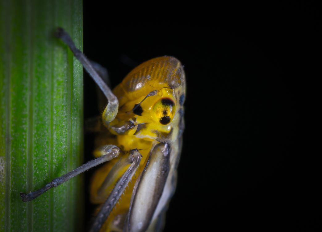 Фото листовертик макрос насекомое - бесплатные картинки на Fonwall