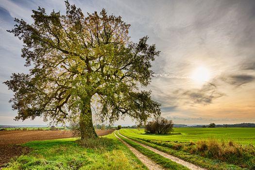 Photo free tree, plowed field, landscape